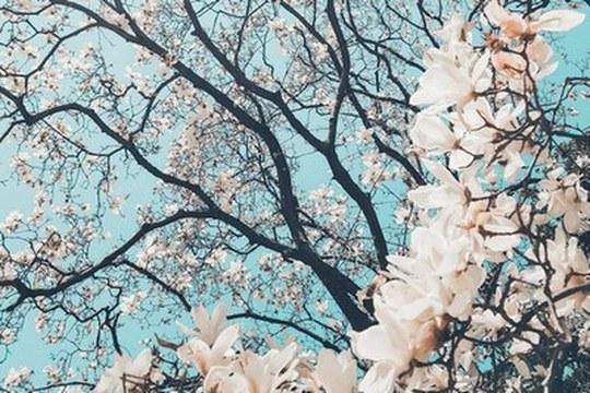 Nasce la Cattedra Mokichi Okada sulla Bellezza